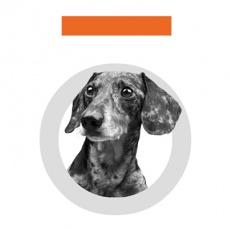 Toth Marketing profile