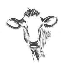 Orange Cattle profile
