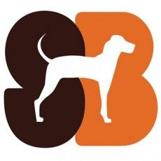 Standard Beagle Studio profile